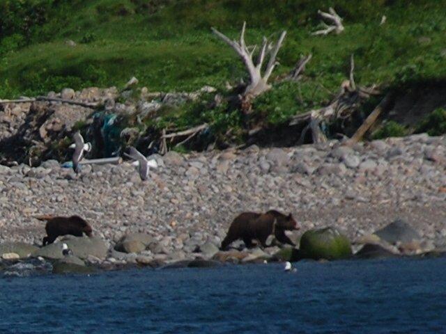 Gli orsi: è meglio vederli da lontano