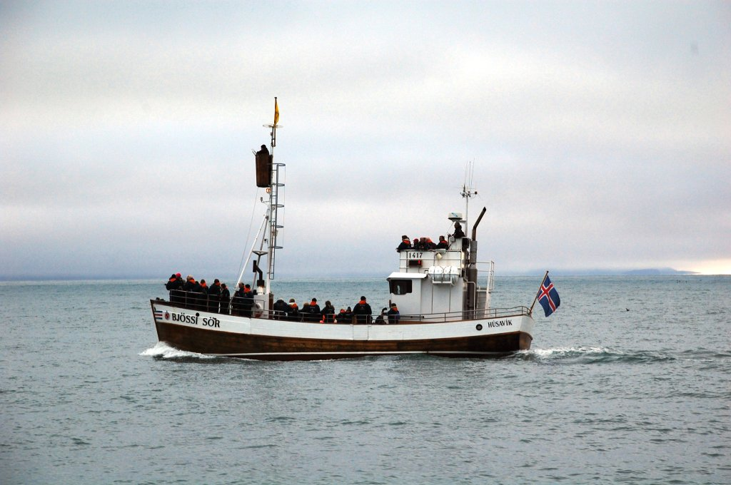 Cosa fare in Islanda: whale watching a Husavik