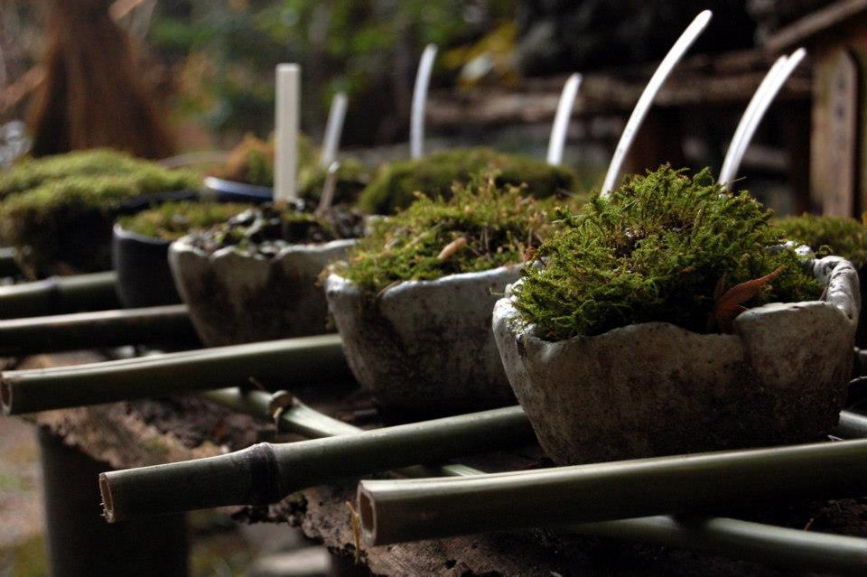 I vari tipi di muschio del Gio-ji (foto di Patrick Colgan, 2014)