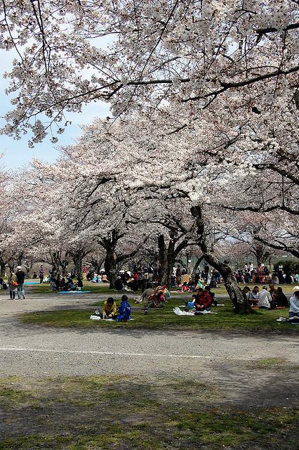 Hanami al parco di Arashiyama