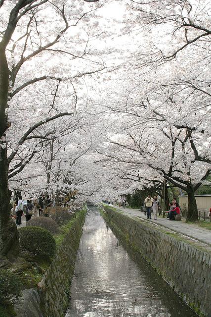 Il sentiero della filosofia Kyoto