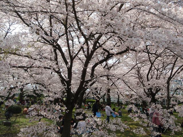 Giardini botanici di Kyoto