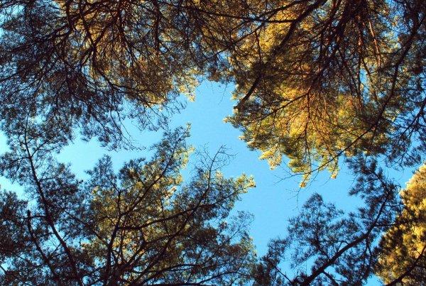 Gli alberi sopra di me, Matsushima (foto di Patrick Colgan)