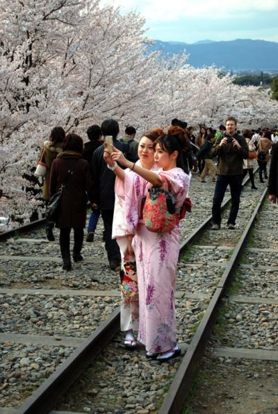 Fra i ciliegi a Keage, Kyoto (foto di Patrick Colgan, 2014)