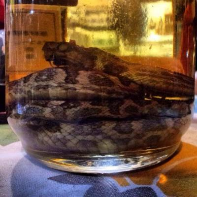 Habushu, distillato con serpente