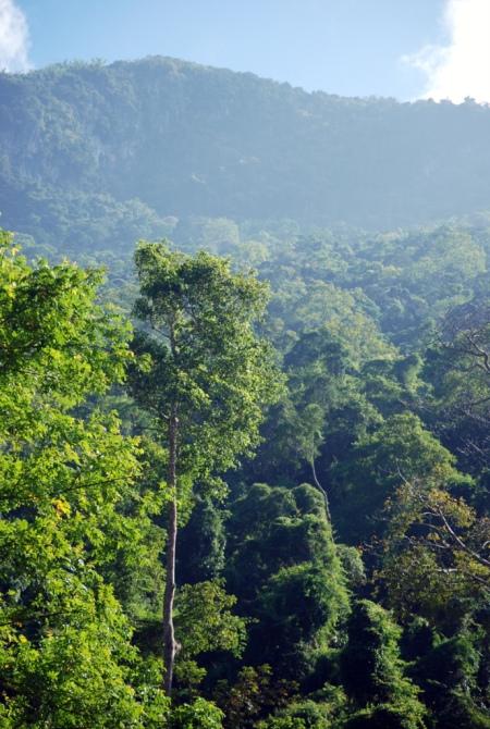 Gli alberi della giungla laotiana (foto di Patrick Colgan, 2014)