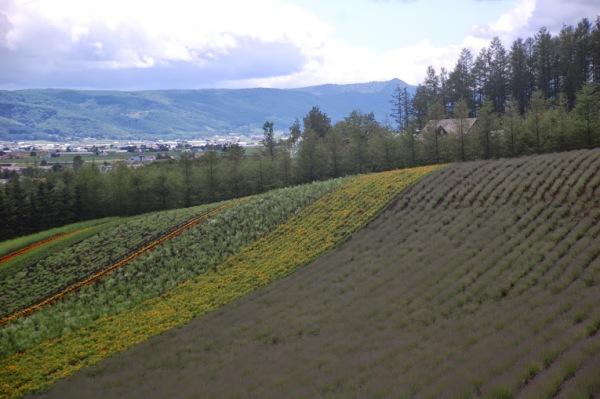 Farm Tomita, 2011, foto di Patrick Colgan