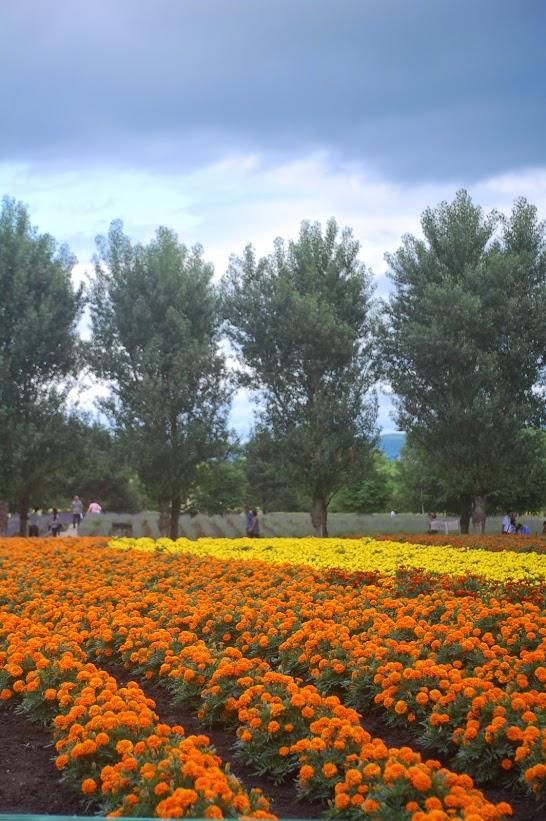 Farm Tomita (foto di Patrick Colgan, 2011)